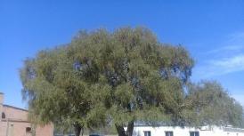 El árbol y la escuela