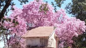 """""""Quiero hacer contigo, lo que la primavera hace con los cerezos"""""""